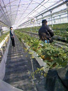京都八幡市おさぜん農園