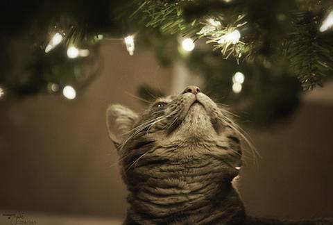 クリスマス気分は12月に入ってからだと遅いの?