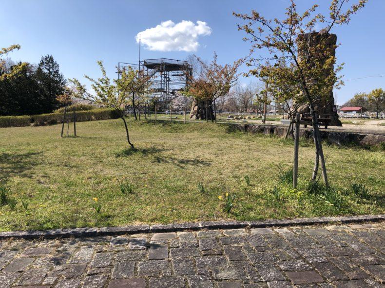 滋賀県ブルーメーの丘