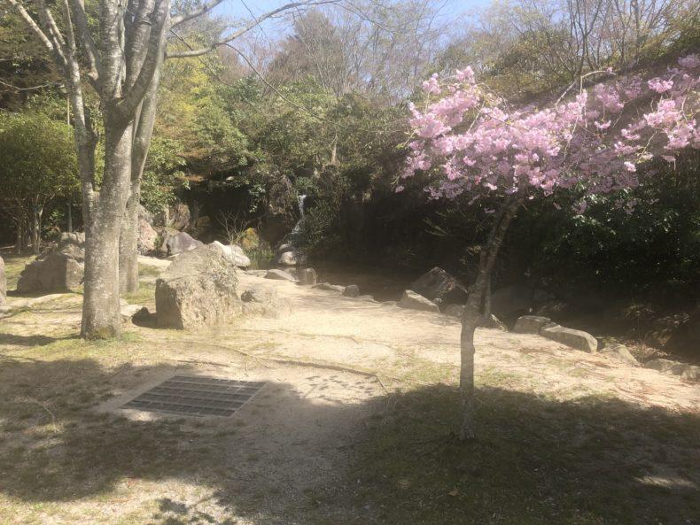 京都るり渓温泉桜