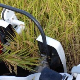 田舎に帰って稲刈りの手伝い